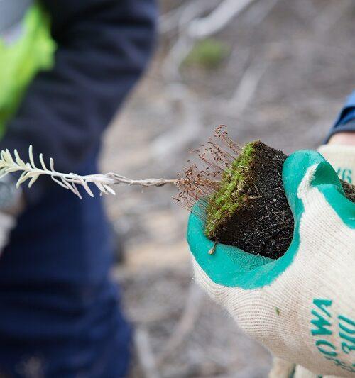 Barwon_Coast_Staff-Planting